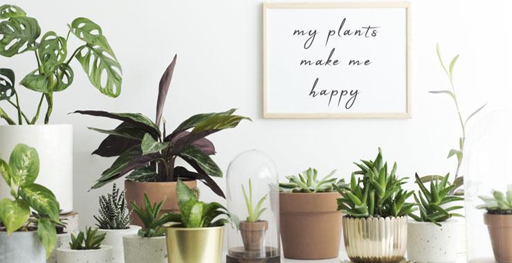 Evinizi bitkilerle dekore edebileceğiniz 6 yol