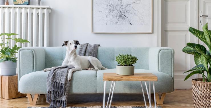 Evinizin havasını temizleyecek 7 bitki