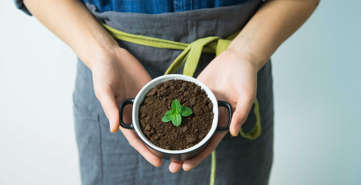 Evde yetiştirebileceğiniz tedavi edici bitkiler