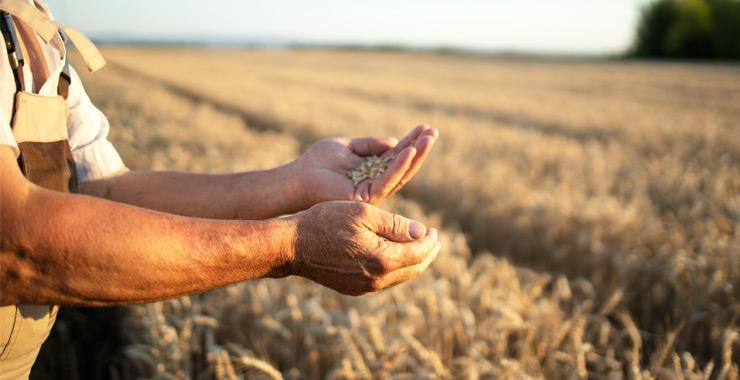 Devlet destekli tarım sigortası sözleşmeleri katılım sigortacılığı kapsamında da düzenlenebilecek